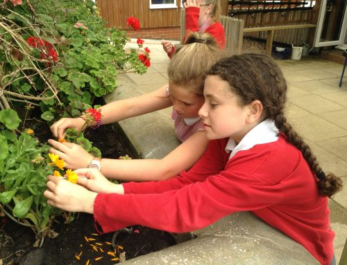 Pollination in class 4