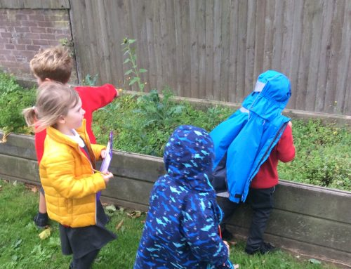 We're going on a plant hunt!