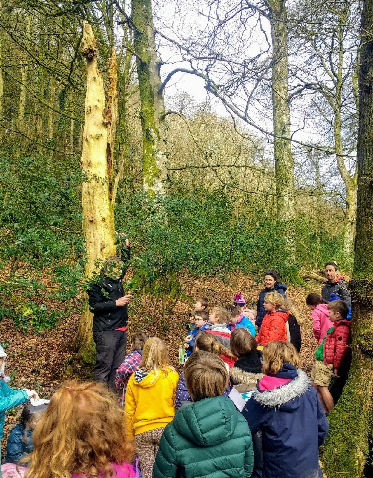 Class 3 visit Chapel Wood to find out about Britain's woodlands