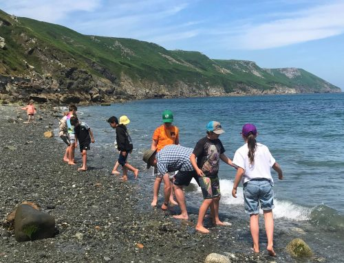 Year 6s on Lundy…